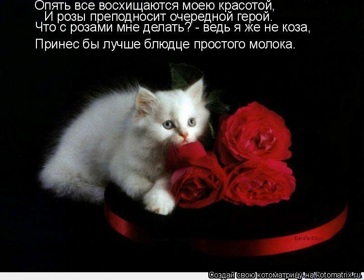 Котоматрица: Опять все восхищаются моею красотой, И розы преподносит очередной герой. Что с розами мне делать? - ведь я же не коза, Принес бы лучше блюдце