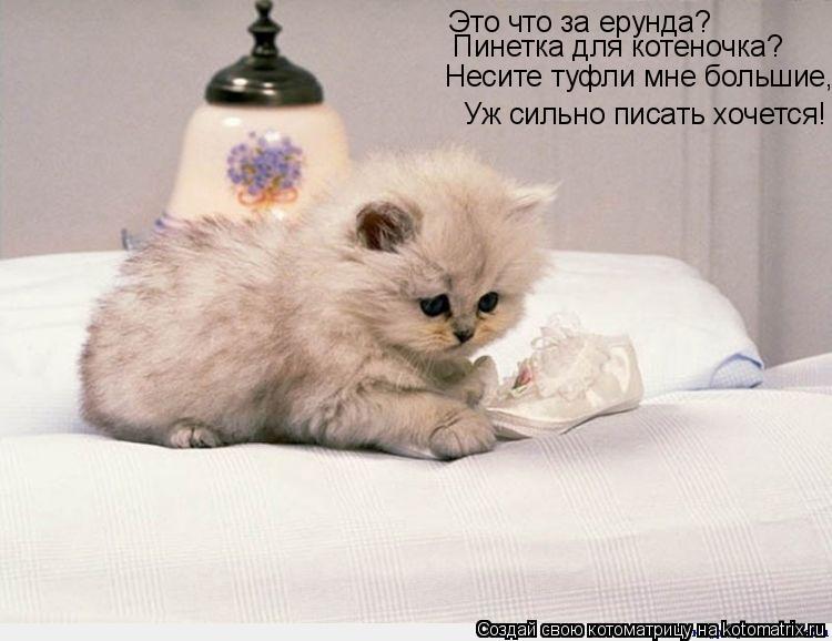 Котоматрица: Это что за ерунда? Пинетка для котеночка? Несите туфли мне большие, Уж сильно писать хочется!