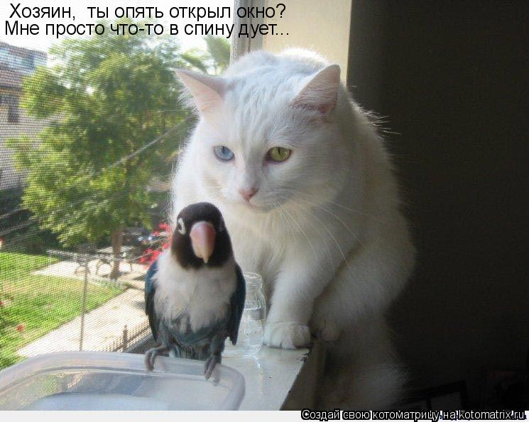 Котоматрица: Хозяин,  ты опять открыл окно? Мне просто что-то в спину дует...