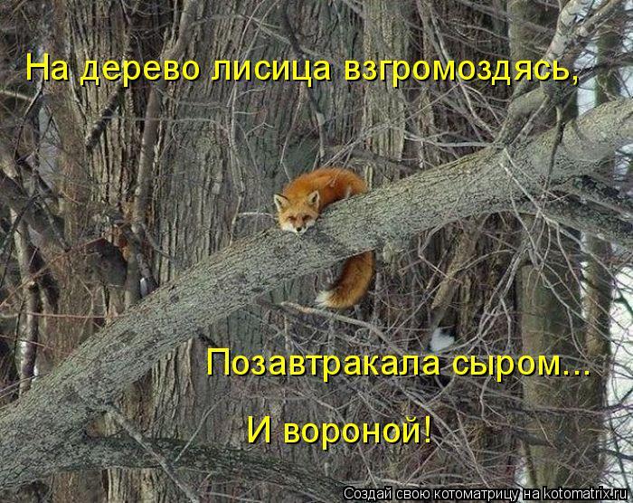 Котоматрица: На дерево лисица взгромоздясь, Позавтракала сыром... И вороной!