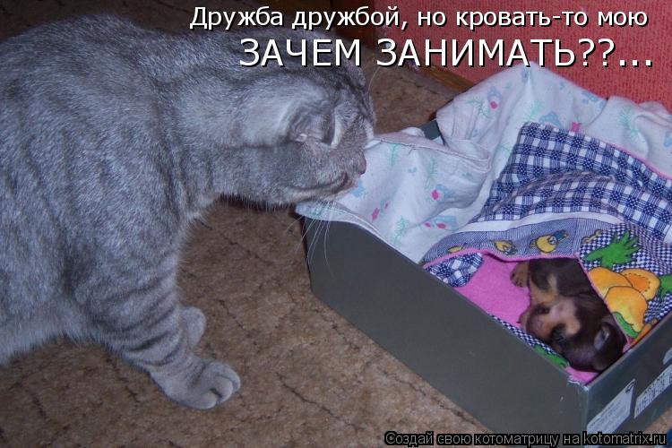 Котоматрица: Дружба дружбой, но кровать-то мою ЗАЧЕМ ЗАНИМАТЬ??...