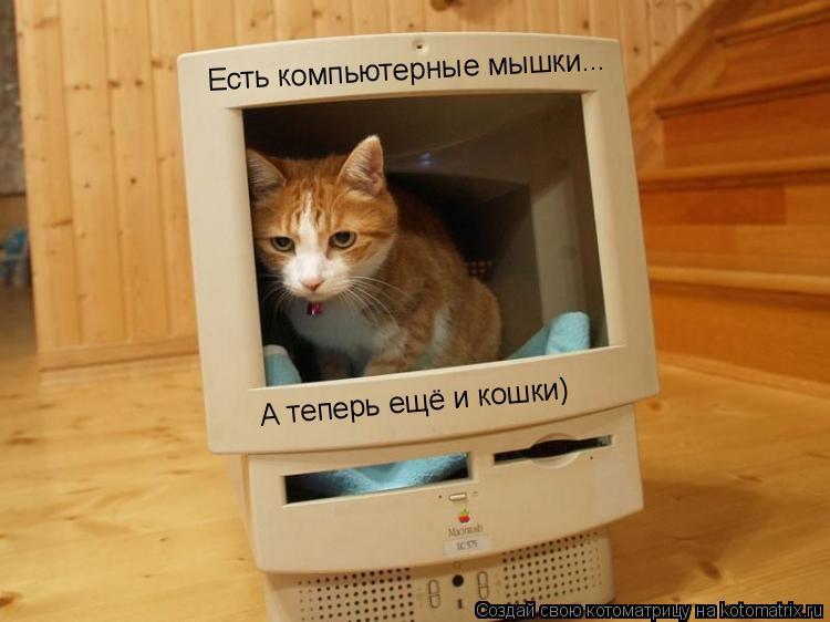 Котоматрица: Есть компьютерные мышки... А теперь ещё и кошки)