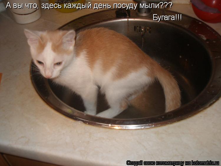 Котоматрица: А вы что, здесь каждый день посуду мыли??? Бугага!!!