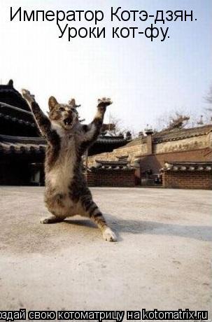 Котоматрица: Император Котэ-дзян . Уроки кот-фу.