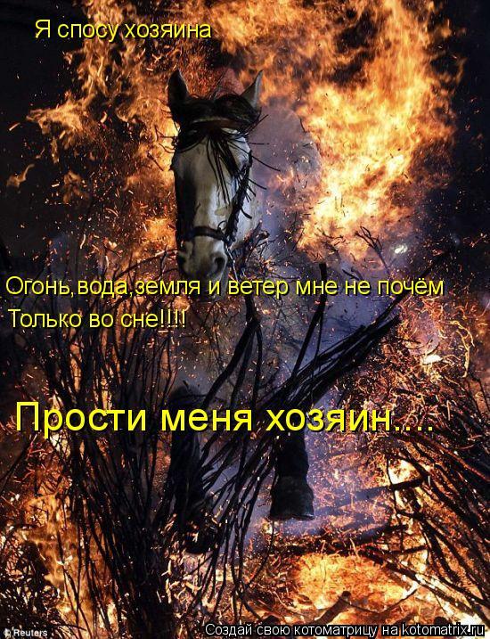 Котоматрица: Я спосу хозяина Огонь,вода,земля и ветер мне не почём Только во сне!!!! Прости меня хозяин....