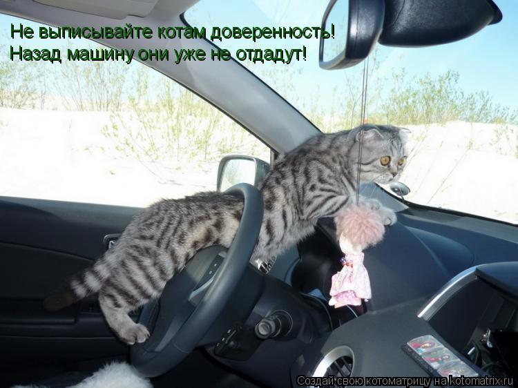 Котоматрица: Не выписывайте котам доверенность! Назад машину они уже не отдадут! Назад машину они уже не отдадут!
