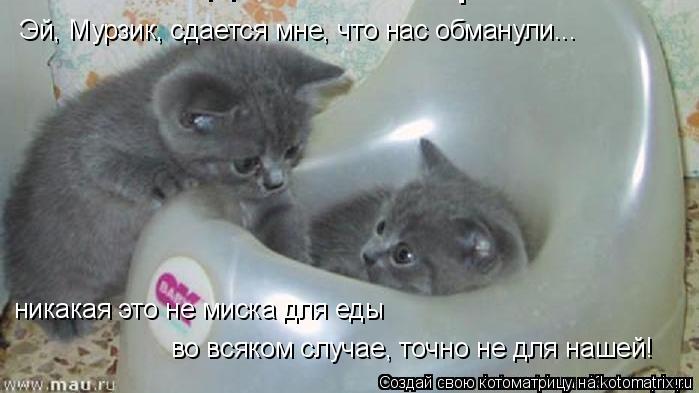 Котоматрица: Эй, Мурзик, сдается мне, что нас обманули... никакая это не миска для еды во всяком случае, точно не для нашей!