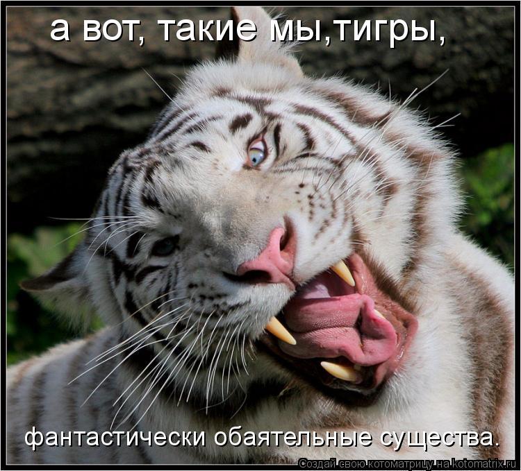 Котоматрица: а вот, такие мы,тигры, фантастически обаятельные существа.