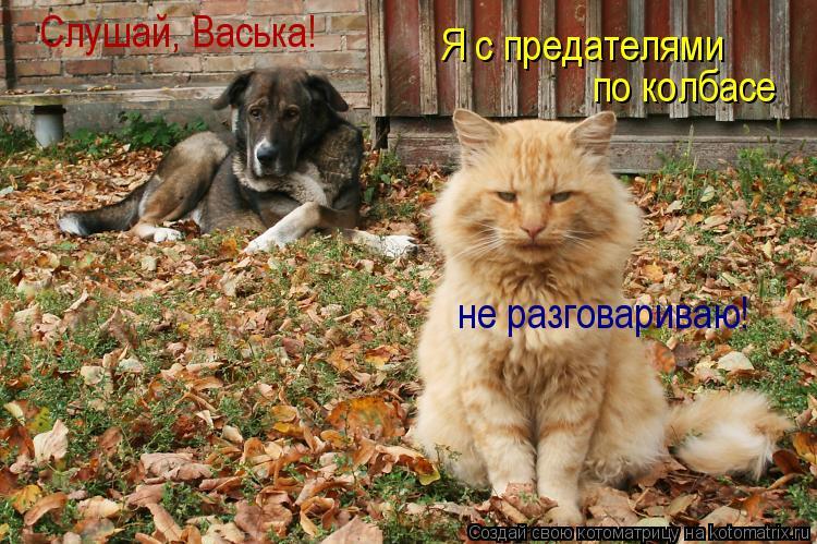 Котоматрица: Слушай, Васька! Я с предателями по колбасе  не разговариваю!