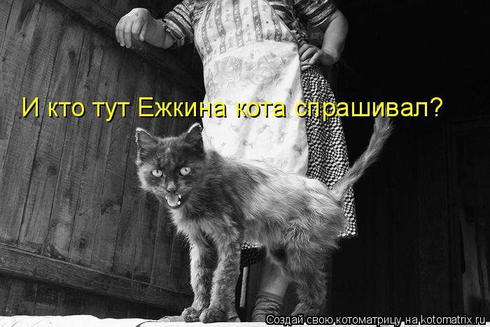 Котоматрица: И кто тут Ежкина кота спрашивал?