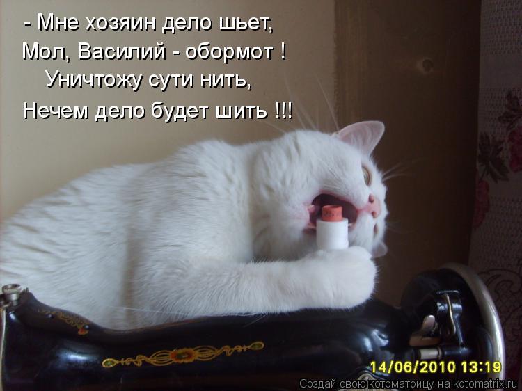 Котоматрица: - Мне хозяин дело шьет, Мол, Василий - обормот ! Уничтожу сути нить, Нечем дело будет шить !!!