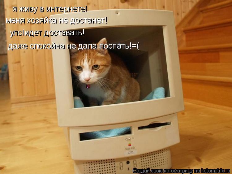 Котоматрица: я живу в интернете! меня хозяйка не достанет! упс!идет доставать! даже спокойна не дала поспать!=(