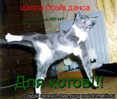 Котоматрица: Школа брэйк данса  Для котов!!! Одно занятие 800 руб.
