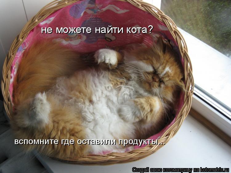 Котоматрица: не можете найти кота? вспомните где оставили продукты...