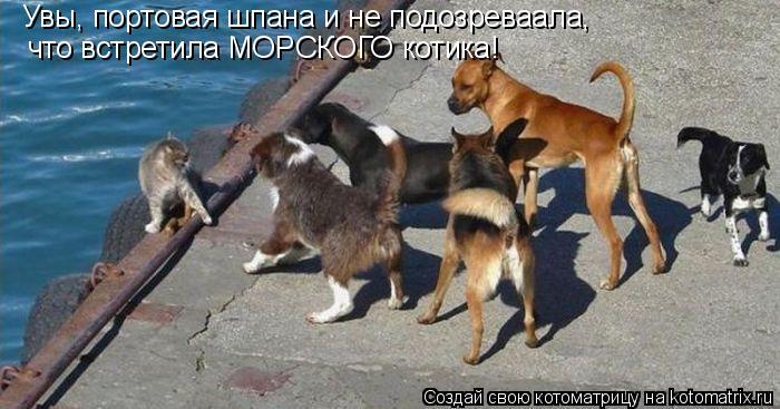 Котоматрица: Увы, портовая шпана и не подозреваала,  что встретила МОРСКОГО котика!