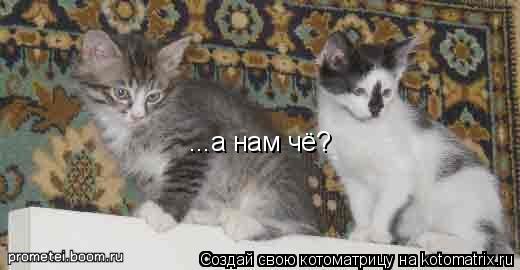 Котоматрица: ...а нам чё?