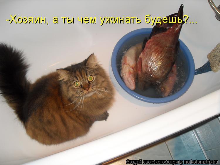 Котоматрица: -Хозяин, а ты чем ужинать будешь?...