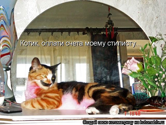Котоматрица: Котик, оплати счета моему стилисту...