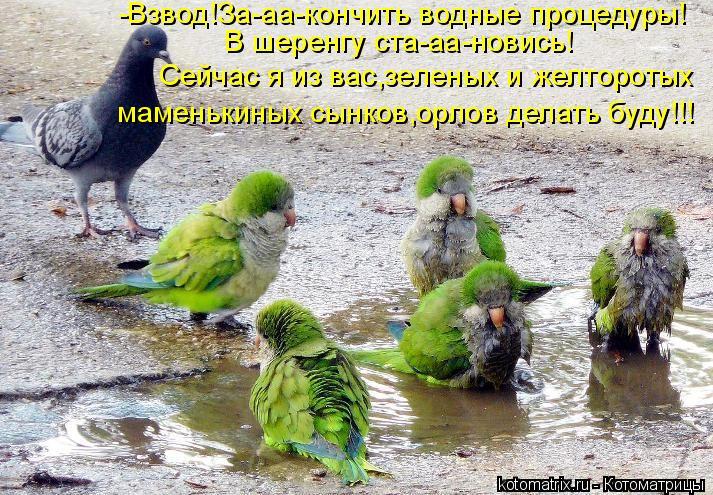 Котоматрица: -Взвод!За-аа-кончить водные процедуры! В шеренгу ста-аа-новись! Сейчас я из вас,зеленых и желторотых маменькиных сынков,орлов делать буду!!!