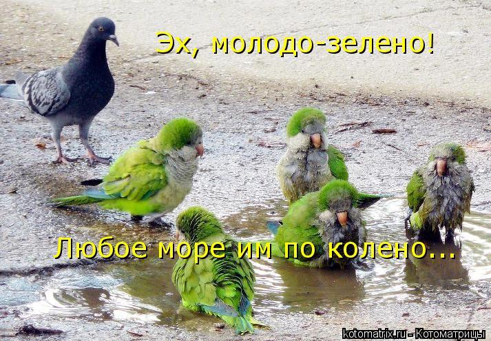 Котоматрица: Эх, молодо-зелено! Любое море им по колено...