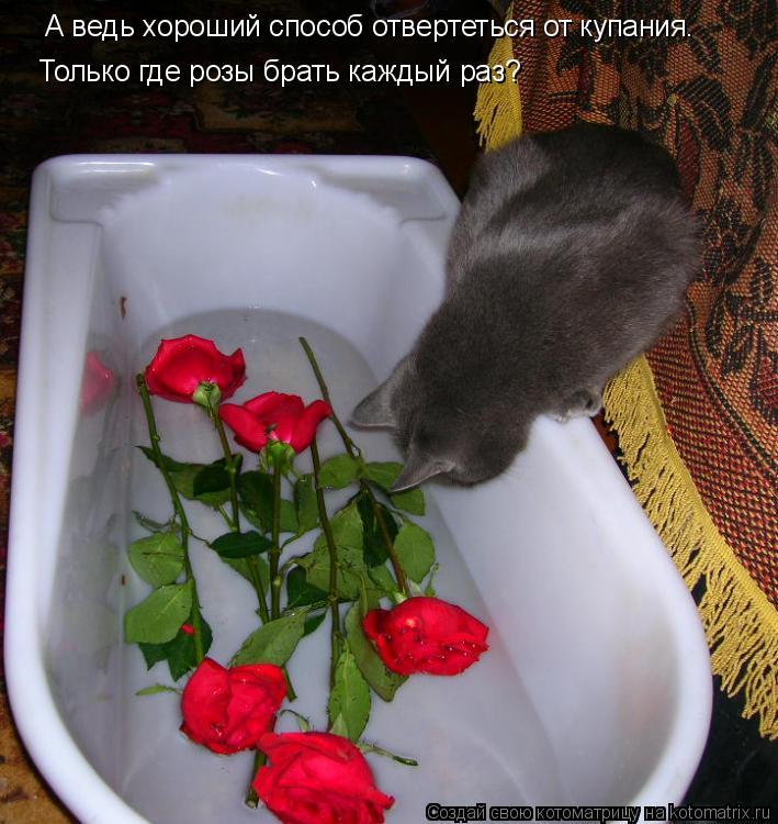 Котоматрица: А ведь хороший способ отвертеться от купания. Только где розы брать каждый раз?