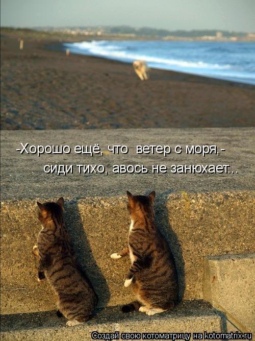 Котоматрица: -Хорошо ещё, что  ветер с моря,-   сиди тихо, авось не занюхает...