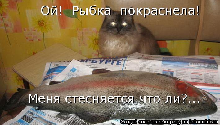 Котоматрица: Ой!  Рыбка  покраснела! Меня стесняется что ли?...