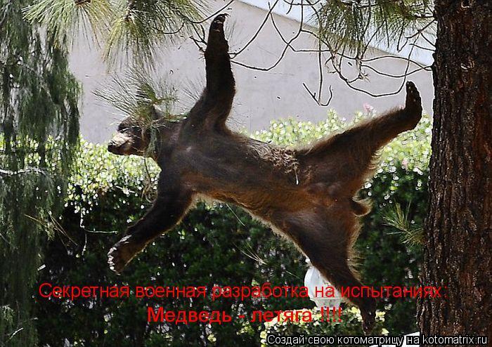 Котоматрица: Секретная военная разработка на испытаниях: Медведь - летяга !!!!