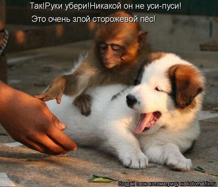 Котоматрица: Так!Руки убери!Никакой он не уси-пуси! Это очень злой сторожевой пёс!
