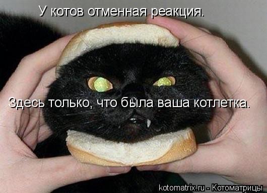 Котоматрица: Здесь только, что была ваша котлетка. У котов отменная реакция.