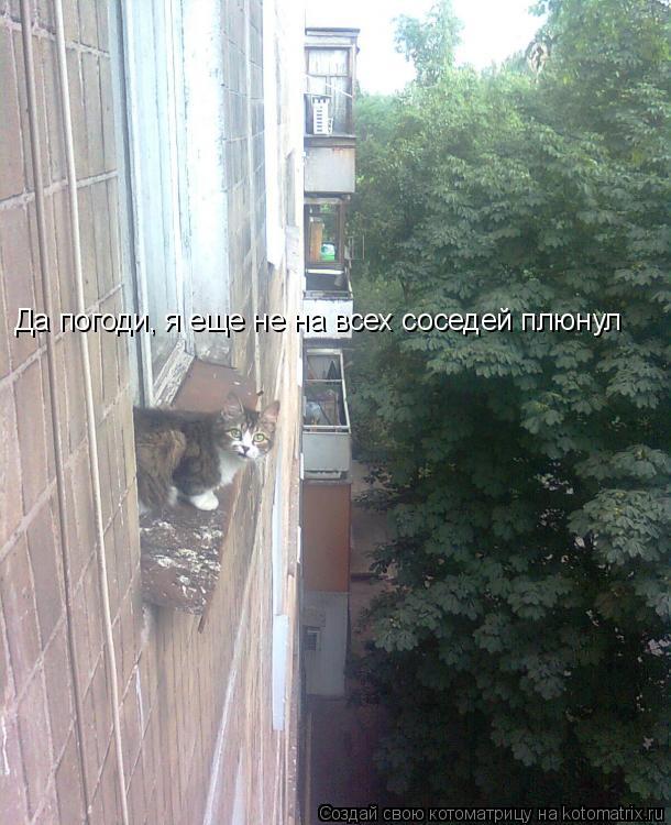 Котоматрица: Да погоди, я еще не на всех соседей плюнул