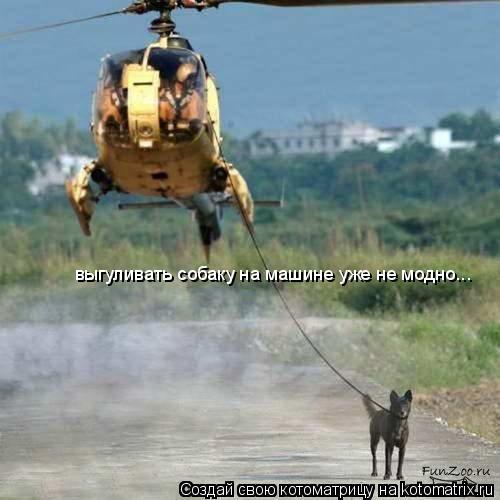 Котоматрица: выгуливать собаку на машине уже не модно...