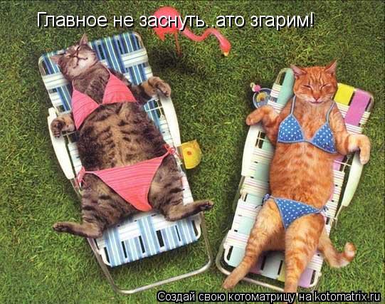 Котоматрица: Все  хорошо, только  Главное не заснуть..ато згарим!