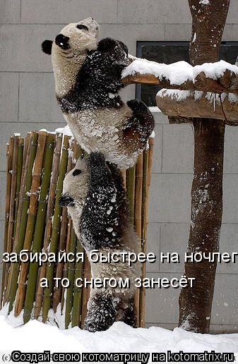 Котоматрица: забирайся быстрее на ночлег а то снегом занесёт