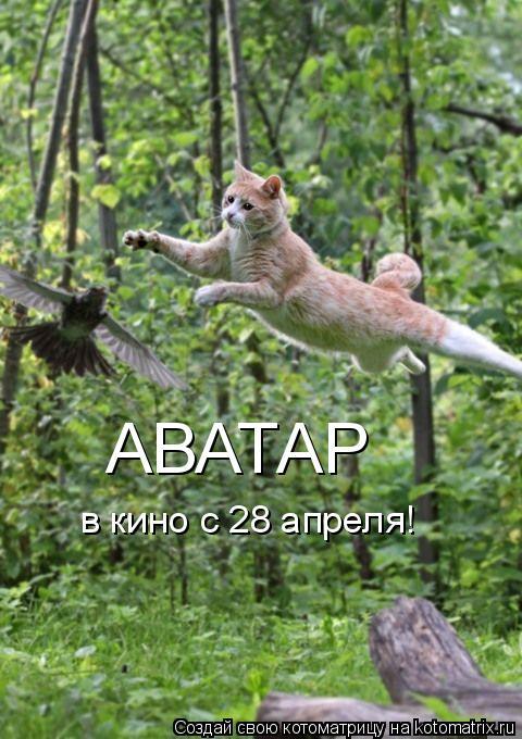 Котоматрица: АВАТАР в кино с 28 апреля!