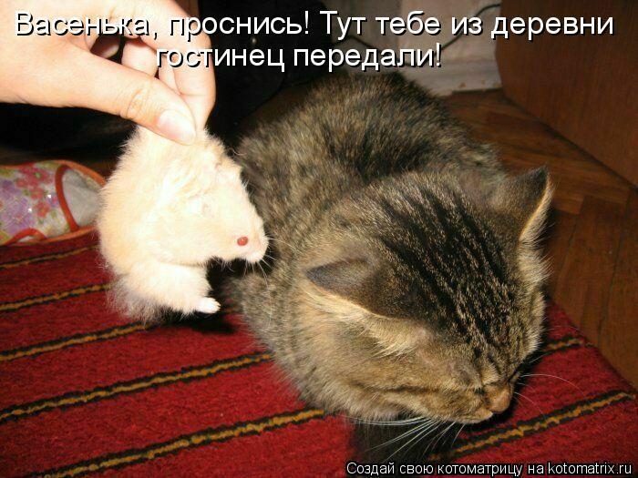 Котоматрица: Васенька, проснись! Тут тебе из деревни  гостинец передали!