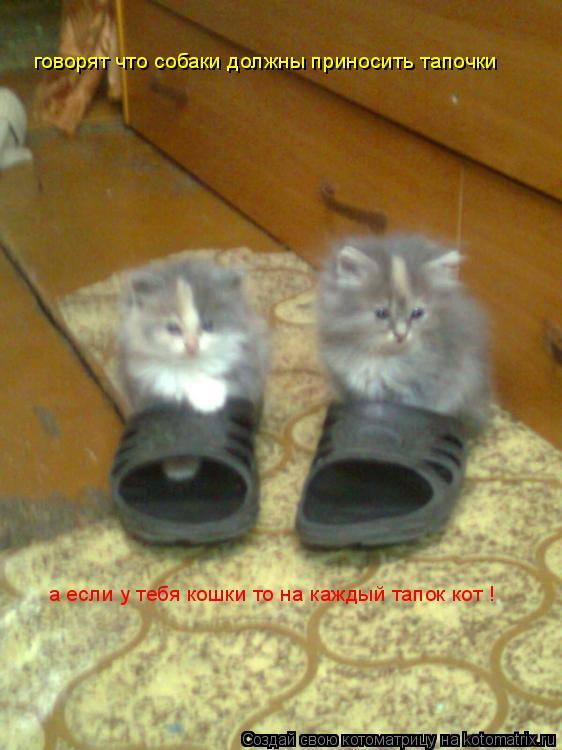 Котоматрица: говорят что собаки должны приносить тапочки  а если у тебя кошки то на каждый тапок кот !