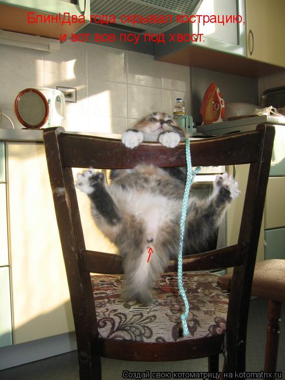 Котоматрица: Блин!Два года скрывал кострацию, и вот все псу под хвост. ^ /