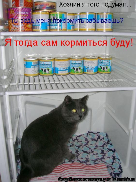 Котоматрица: Хозяин,я того подумал... Ты ведь меня покормить забываешь? Я тогда сам кормиться буду!