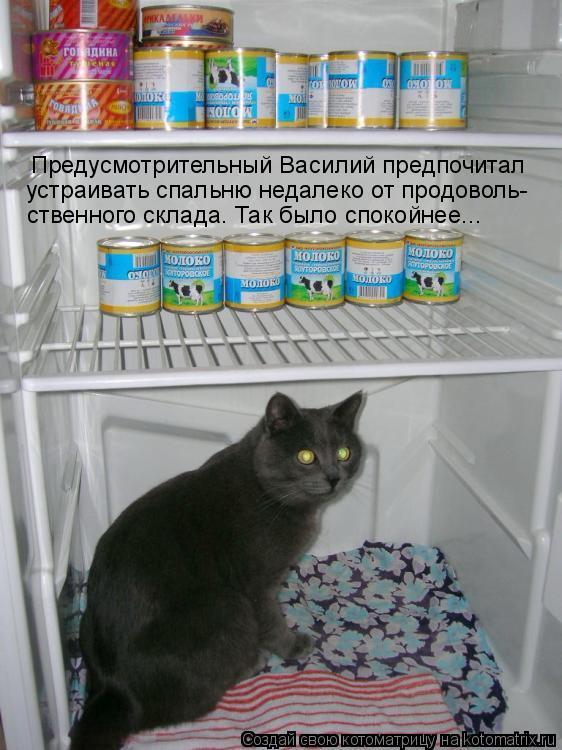 Котоматрица: Предусмотрительный Василий предпочитал устраивать спальню недалеко от продоволь- ственного склада. Так было спокойнее...