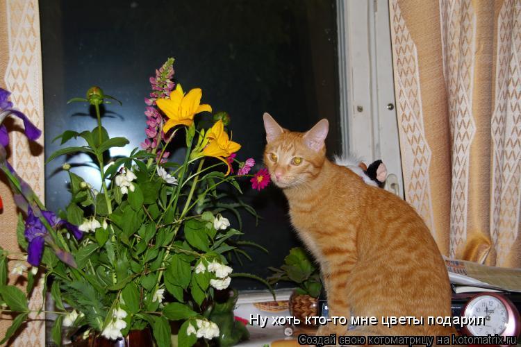 Котоматрица: Ну хоть кто-то мне цветы подарил