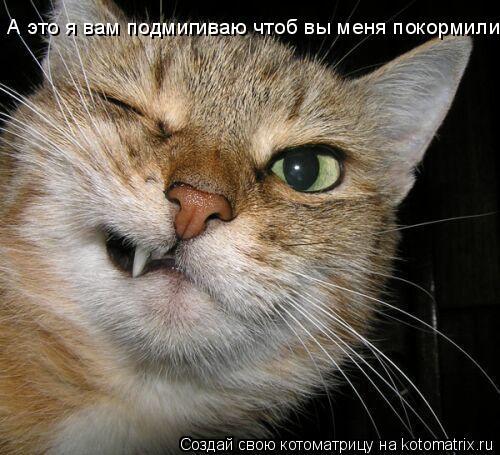 Котоматрица: А это я вам подмигиваю чтоб вы меня покормили!