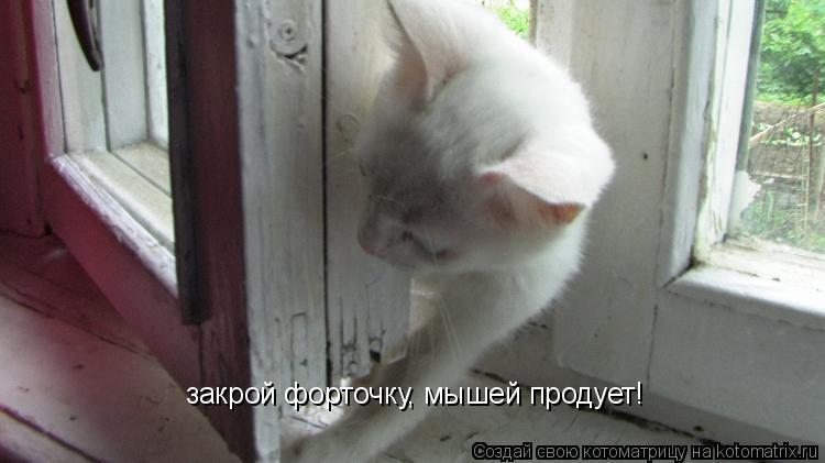 Котоматрица: закрой форточку, мышей продует!