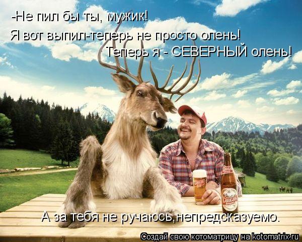 Котоматрица: -Не пил бы ты, мужик! Я вот выпил-теперь не просто олень! Теперь я - СЕВЕРНЫЙ олень! А за тебя не ручаюсь,непредсказуемо.