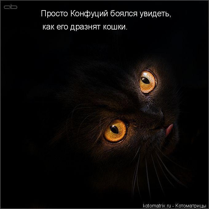 Котоматрица: Просто Конфуций боялся увидеть,  как его дразнят кошки.