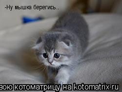 Котоматрица: -Ну мышка берегись..