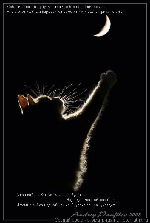 """Котоматрица: Собаки воют на луну, мечтая что б она свалилась... А кошка?... - Кошка ждать не будет...  И тёмною, безлюдной ночью, """"кусочек сыра"""" украдёт... Ведь д"""