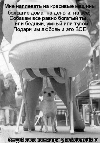 Котоматрица: Мне наплевать на красивые машины большие дома, на деньги, на все.  Собакам все равно богатый ты  или бедный, умный или тупой. Подари им любовь