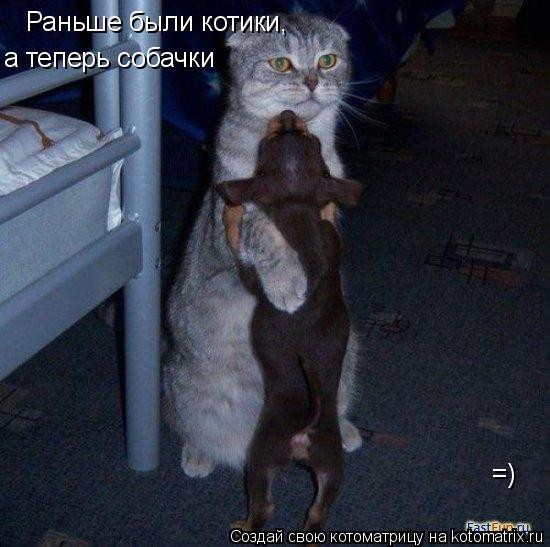 Котоматрица: Раньше были котики, а теперь собачки =)