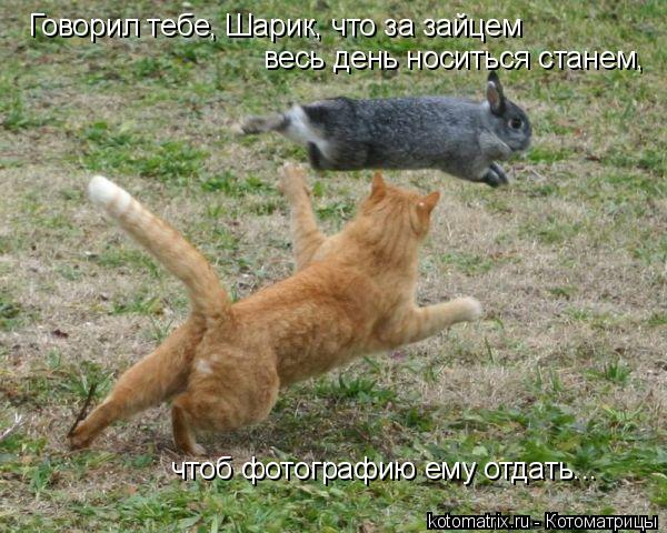 Котоматрица: Говорил тебе, Шарик, что за зайцем  весь день носиться станем,  чтоб фотографию ему отдать...